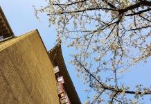 """学校坐拥珞珈山,环绕东湖水,武大樱花每年三月中旬进入盛花期,被誉为""""全中国最美的大学之一"""""""